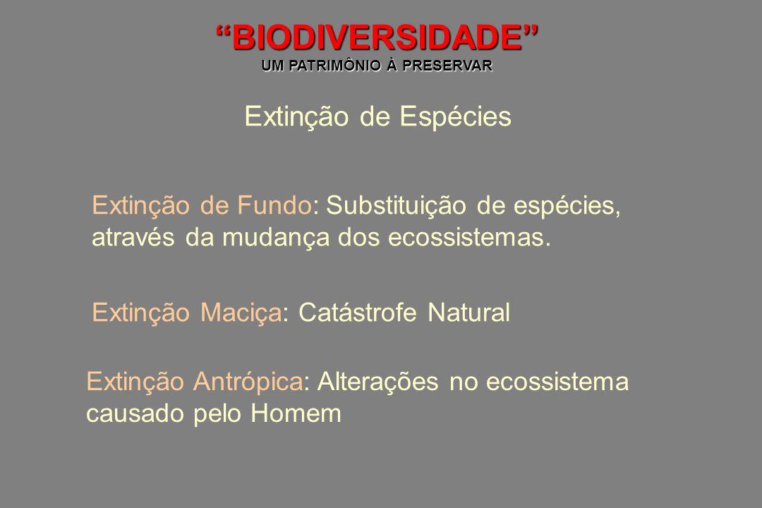 BIODIVERSIDADE UM PATRIMÔNIO À PRESERVAR Extinção de Espécies Extinção de Fundo: Substituição de espécies, através da mudança dos ecossistemas. Extinç