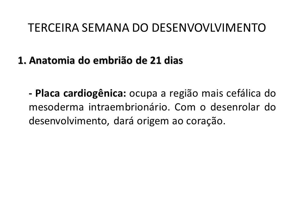 1. Anatomia do embrião de 21 dias - Placa cardiogênica: ocupa a região mais cefálica do mesoderma intraembrionário. Com o desenrolar do desenvolviment