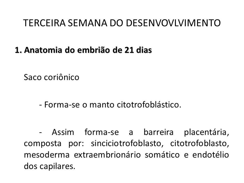 1. Anatomia do embrião de 21 dias Saco coriônico - Forma-se o manto citotrofoblástico. - Assim forma-se a barreira placentária, composta por: sincicio