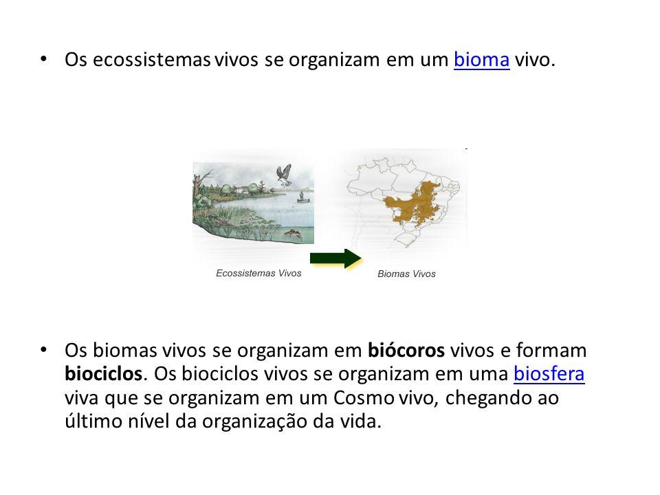 Os ecossistemas vivos se organizam em um bioma vivo.bioma Os biomas vivos se organizam em biócoros vivos e formam biociclos. Os biociclos vivos se org