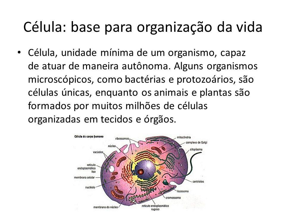 Célula: base para organização da vida Célula, unidade mínima de um organismo, capaz de atuar de maneira autônoma. Alguns organismos microscópicos, com