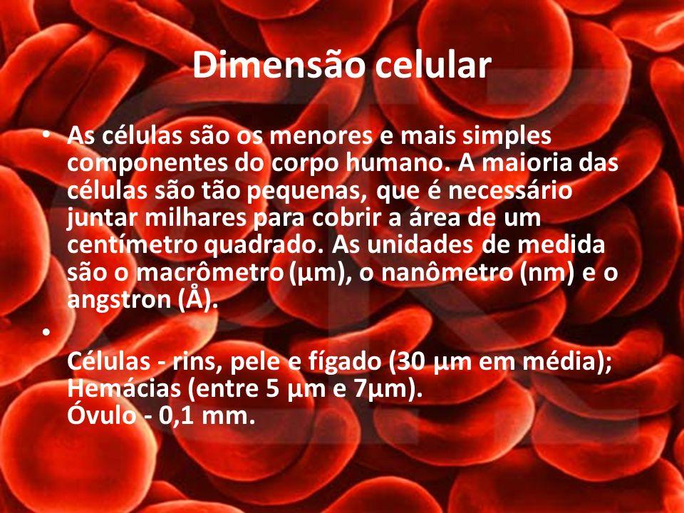 Dimensão celular As células são os menores e mais simples componentes do corpo humano. A maioria das células são tão pequenas, que é necessário juntar