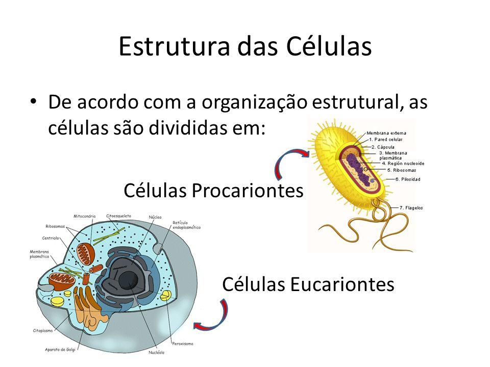 Estrutura das Células De acordo com a organização estrutural, as células são divididas em: Células Procariontes Células Eucariontes