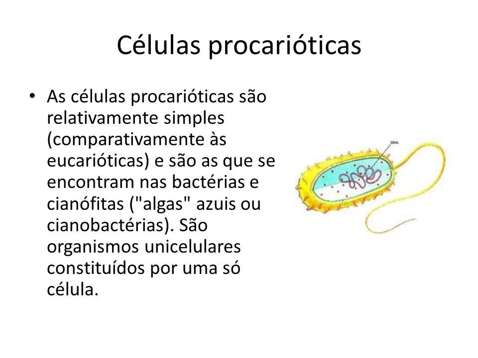 Células procarióticas As células procarióticas são relativamente simples (comparativamente às eucarióticas) e são as que se encontram nas bactérias e