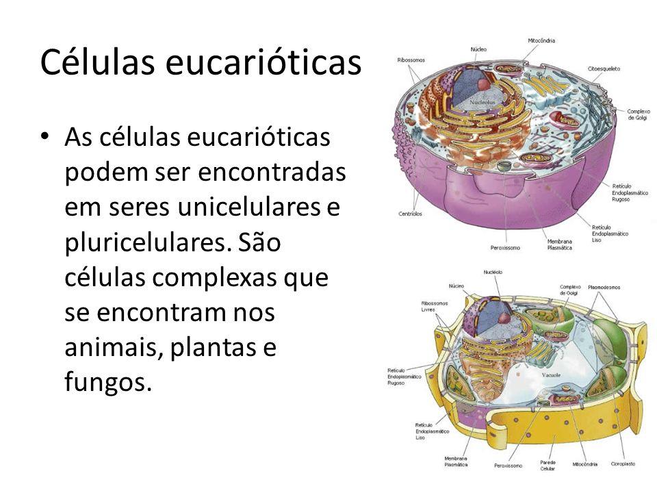 Células eucarióticas As células eucarióticas podem ser encontradas em seres unicelulares e pluricelulares. São células complexas que se encontram nos