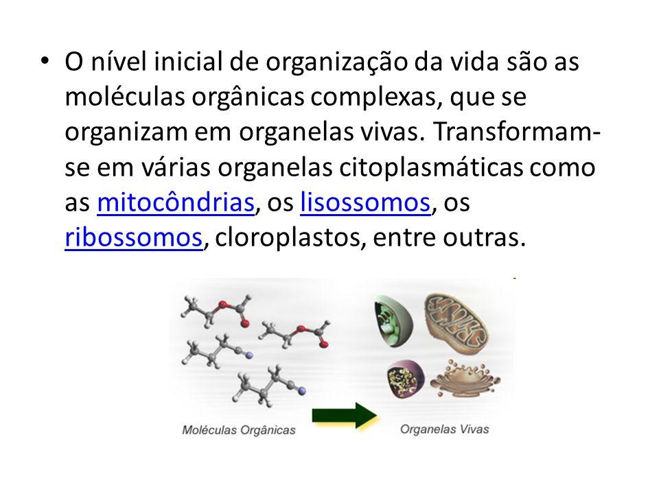 O nível inicial de organização da vida são as moléculas orgânicas complexas, que se organizam em organelas vivas. Transformam- se em várias organelas