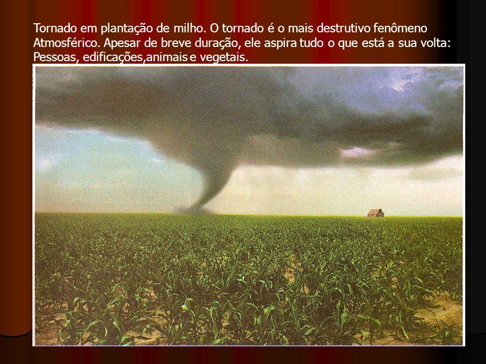 Tornado em plantação de milho. O tornado é o mais destrutivo fenômeno Atmosférico. Apesar de breve duração, ele aspira tudo o que está a sua volta: Pe