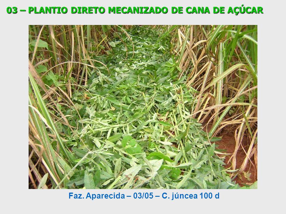 Faz. Aparecida – 03/05 – C. júncea 100 d 03 – PLANTIO DIRETO MECANIZADO DE CANA DE AÇÚCAR