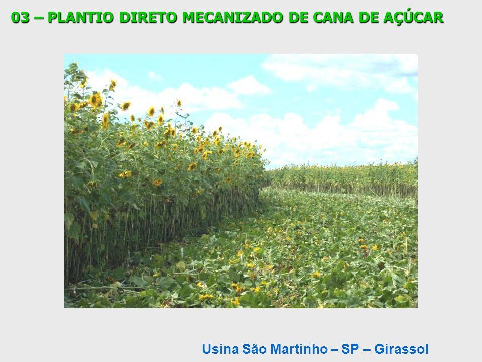 Usina São Martinho – SP – Girassol 03 – PLANTIO DIRETO MECANIZADO DE CANA DE AÇÚCAR