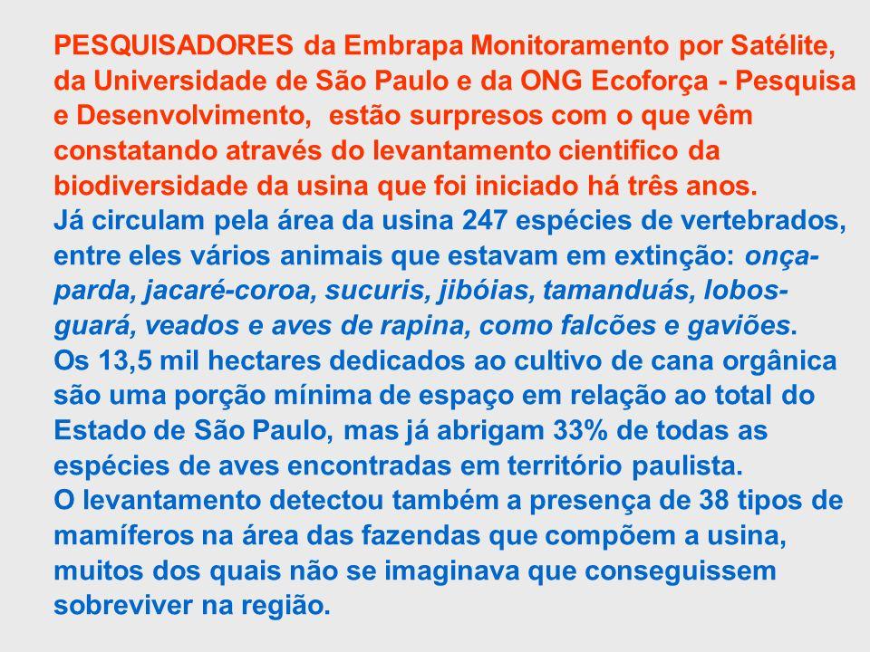 PESQUISADORES da Embrapa Monitoramento por Satélite, da Universidade de São Paulo e da ONG Ecoforça - Pesquisa e Desenvolvimento, estão surpresos com