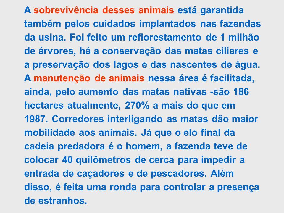 A sobrevivência desses animais está garantida também pelos cuidados implantados nas fazendas da usina. Foi feito um reflorestamento de 1 milhão de árv