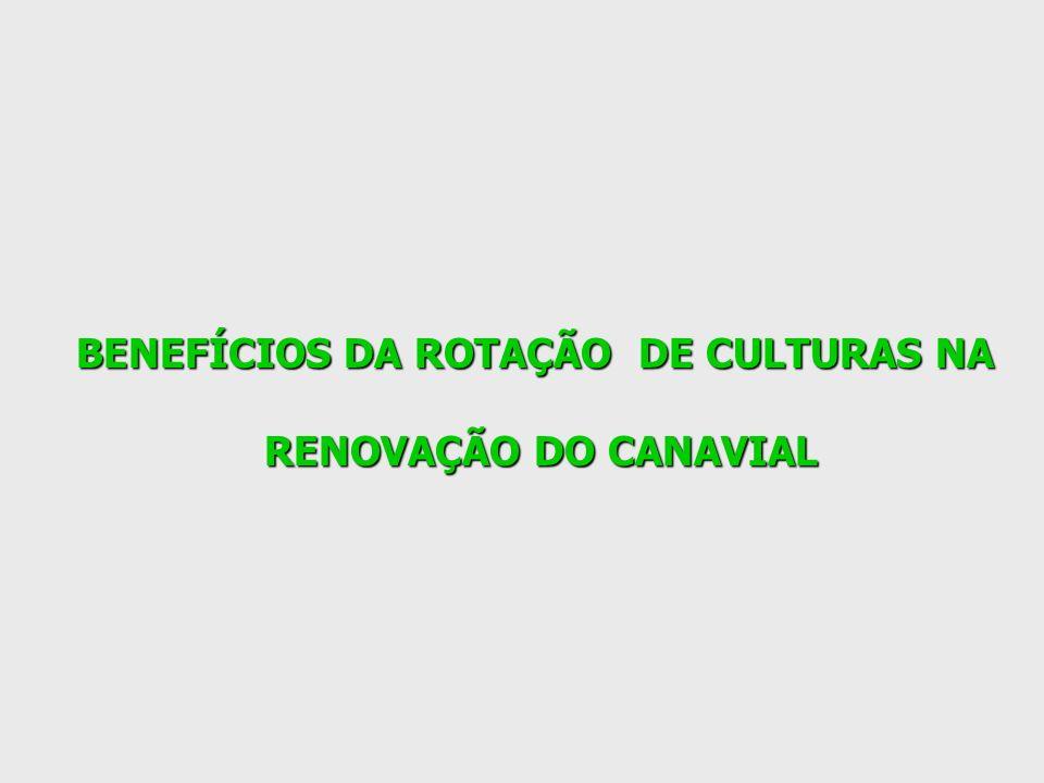 BENEFÍCIOS DA ROTAÇÃO DE CULTURAS NA RENOVAÇÃO DO CANAVIAL