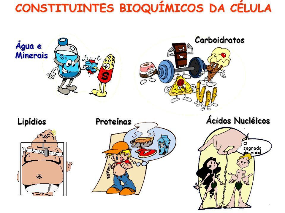 CONSTITUINTES BIOQUÍMICOS DA CÉLULA Água e Minerais Carboidratos ProteínasLipídios Ácidos Nucléicos O segredo da vida!