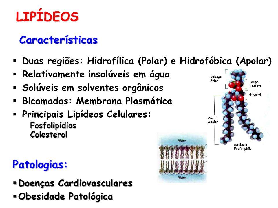 LIPÍDEOS Características Duas regiões: Hidrofílica (Polar) e Hidrofóbica (Apolar) Relativamente insolúveis em água Solúveis em solventes orgânicos Bic