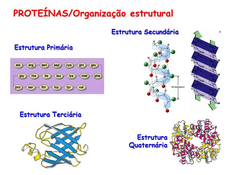 PROTEÍNAS/Organização estrutural Estrutura Primária Estrutura Secundária Estrutura Terciária Estrutura Quaternária