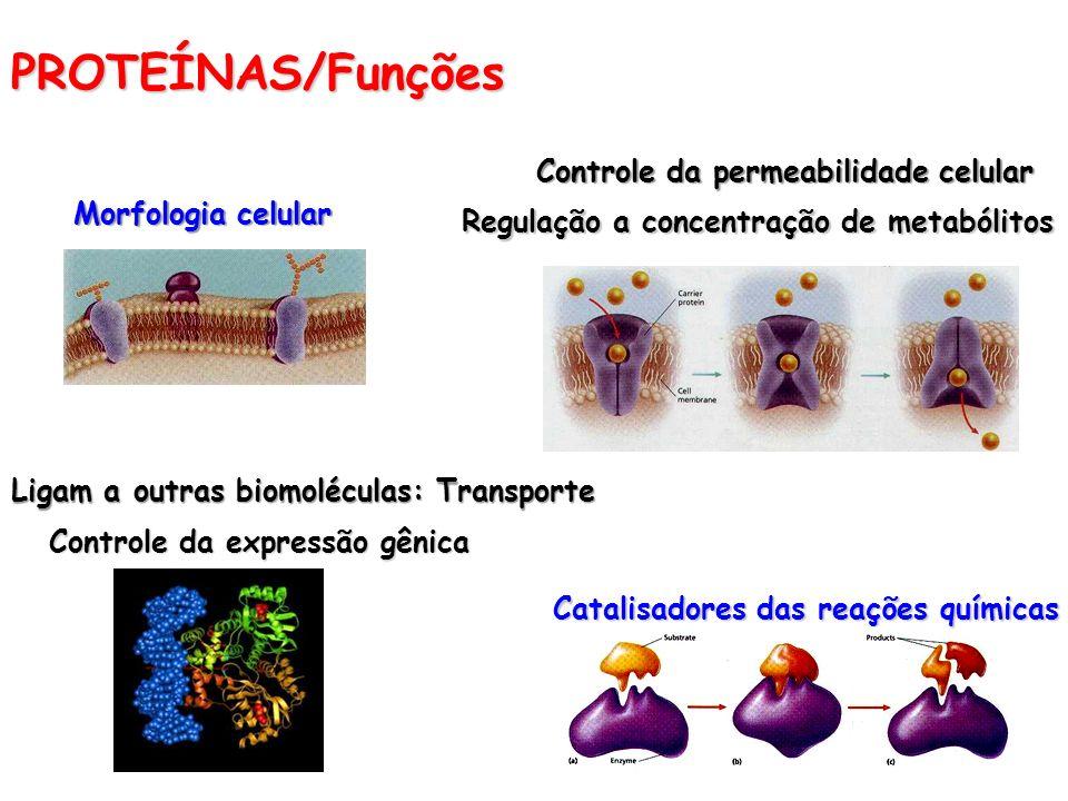 PROTEÍNAS/Funções Morfologia celular Catalisadores das reações químicas Controle da permeabilidade celular Regulação a concentração de metabólitos Lig