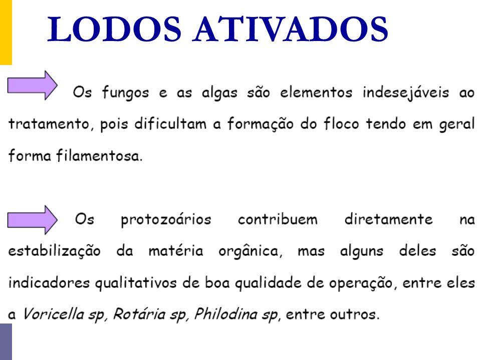Idade do lodo Valores típicos da idade do lodo são: Lodos ativados convencional: θ c = 4 a 10 dias Aeração prolongada: θ c = 18 a 30 dias Lodos ativados convencional: t = 6 a 8 horas (< 0,3 dias) Aeração prolongada: t = 16 a 24 horas (< 0,67 a 1,0 dias) Para o tempo de detenção hidráulica
