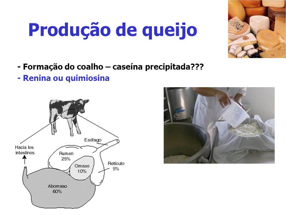 Produção de queijo - Formação do coalho – caseína precipitada??? - Renina ou quimiosina