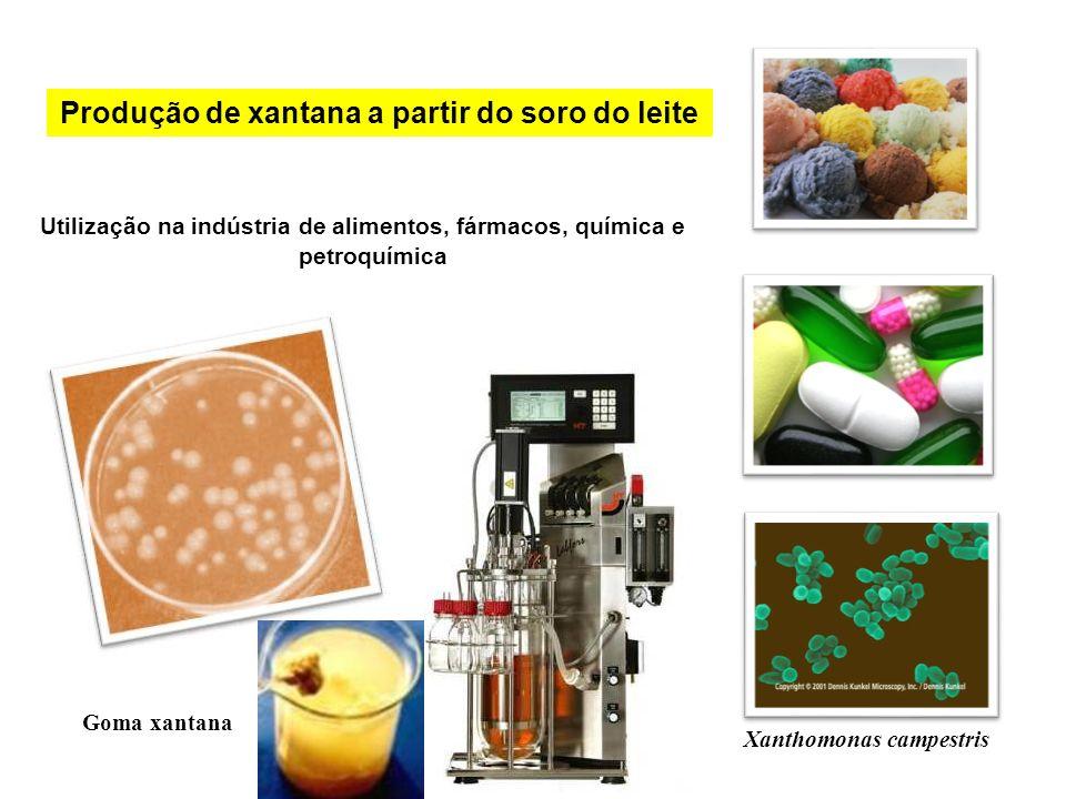 Utilização na indústria de alimentos, fármacos, química e petroquímica Xanthomonas campestris Goma xantana Produção de xantana a partir do soro do lei