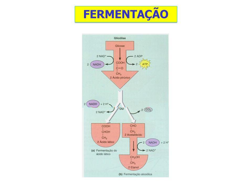 Fermentação Malolática - Processo que nada tem a ver com fermentação regular, pois não envolve levedura nem a produção de álcool.