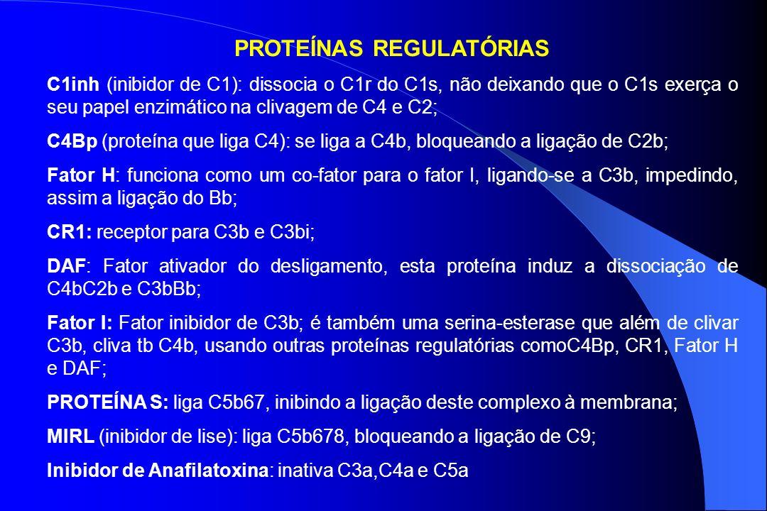 PROTEÍNAS REGULATÓRIAS C1inh (inibidor de C1): dissocia o C1r do C1s, não deixando que o C1s exerça o seu papel enzimático na clivagem de C4 e C2; C4B