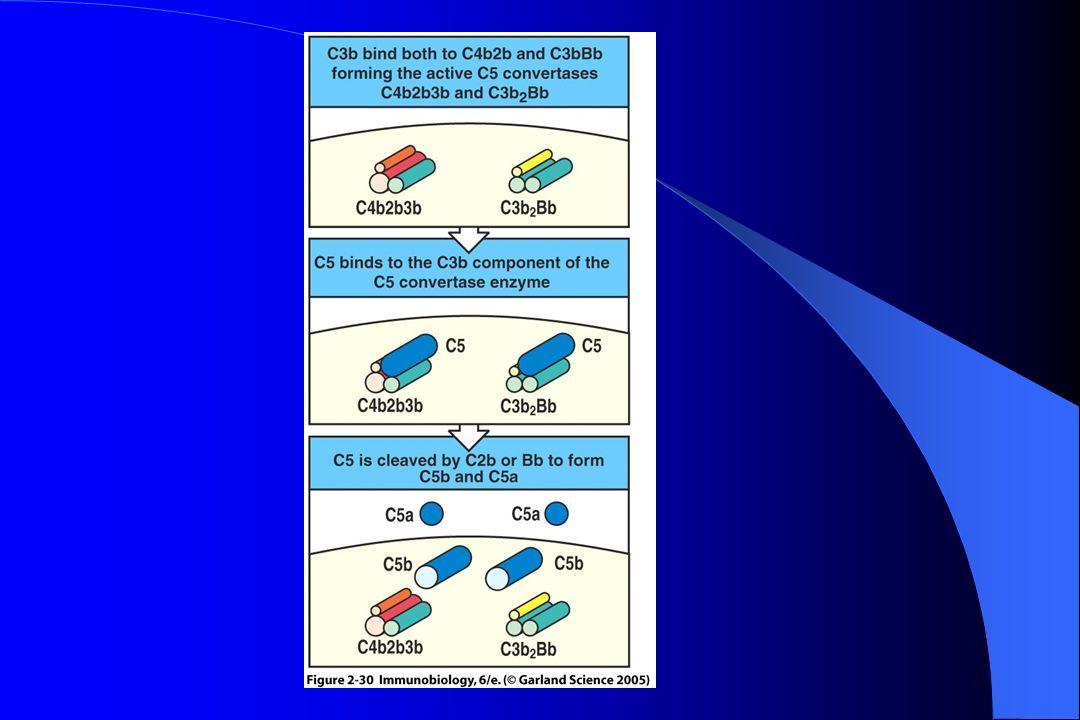 Questões Para Estudo Quais as funções biológicas da ativação do SC .