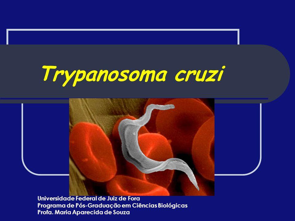 Trypanosoma cruzi Universidade Federal de Juiz de Fora Programa de Pós-Graduação em Ciências Biológicas Profa. Maria Aparecida de Souza