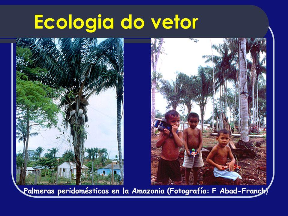 Palmeras peridomésticas en la Amazonia (Fotografía: F Abad-Franch ) Ecologia do vetor