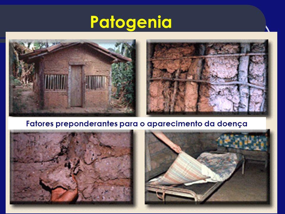 Patogenia Fatores preponderantes para o aparecimento da doença