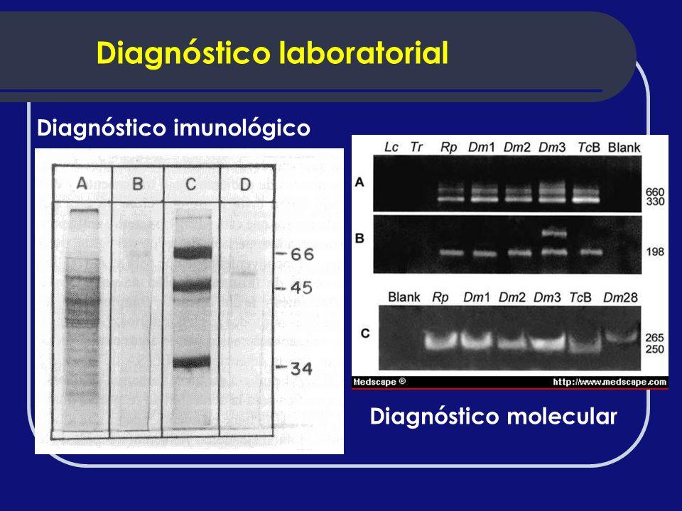 Diagnóstico imunológico Diagnóstico molecular Diagnóstico laboratorial