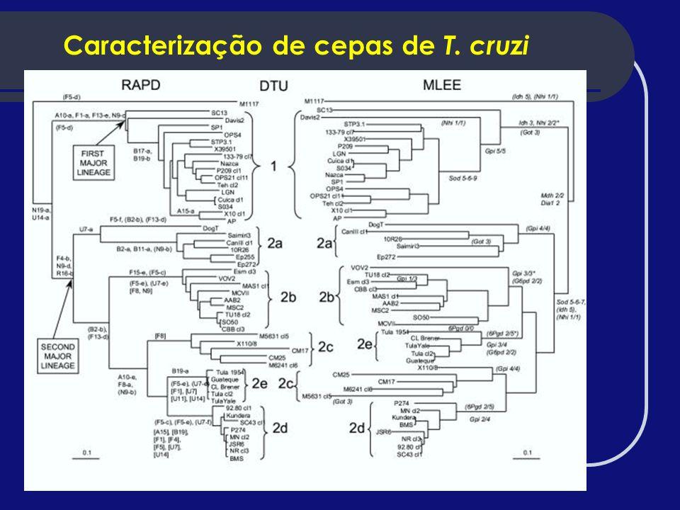 Caracterização de cepas de T. cruzi
