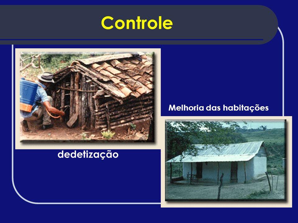 Controle dedetização Melhoria das habitações