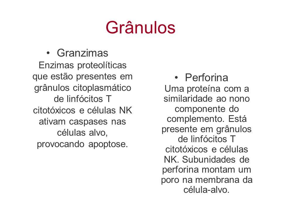 Grânulos Granzimas Enzimas proteolíticas que estão presentes em grânulos citoplasmático de linfócitos T citotóxicos e células NK ativam caspases nas c