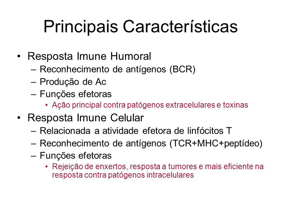 Principais Características Resposta Imune Humoral –Reconhecimento de antígenos (BCR) –Produção de Ac –Funções efetoras Ação principal contra patógenos