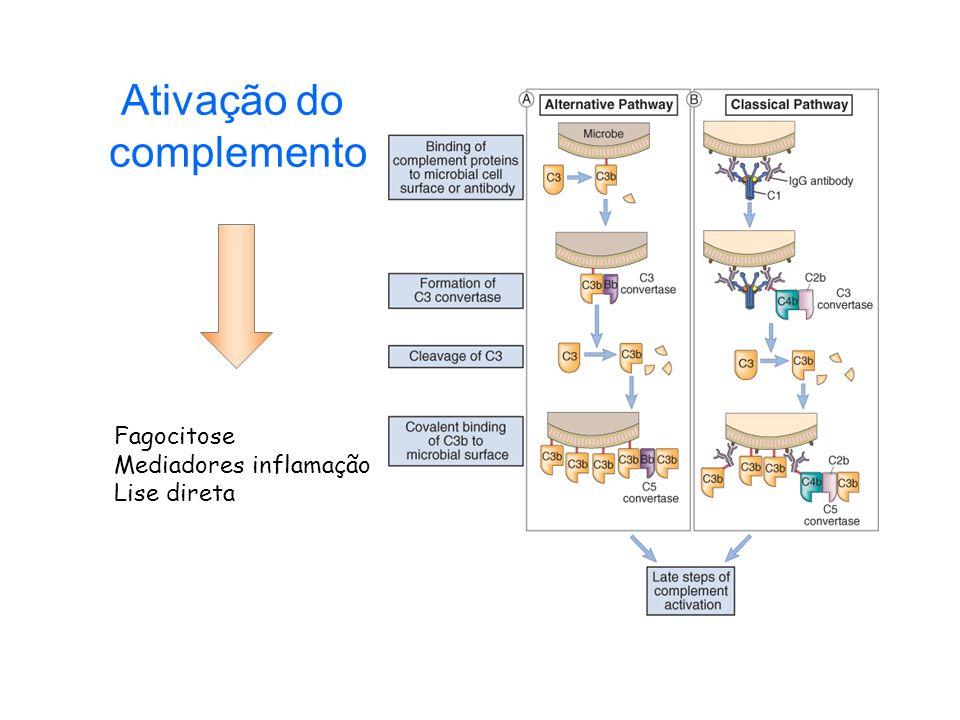 Ativação do complemento Fagocitose Mediadores inflamação Lise direta
