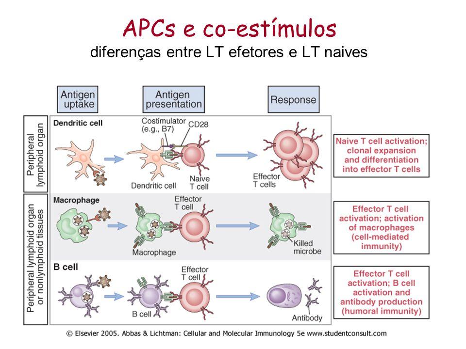 Dois subtipos principais de Linfócitos T CD4+ Célula T helper (Th) ou auxiliar Reconhecimento via MHC II Secreção de citocinas Ação sobre diferentes tipos celulares ( macrófagos, LTc, LB) CD8+ Célula citotóxica (ativação) Reconhecimento via MHC I Morte celular Ação sobre células infectadas e-ou tumorais