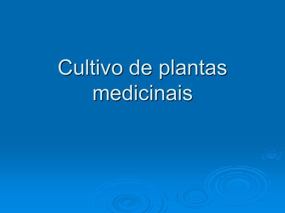 Cultivo de plantas medicinais