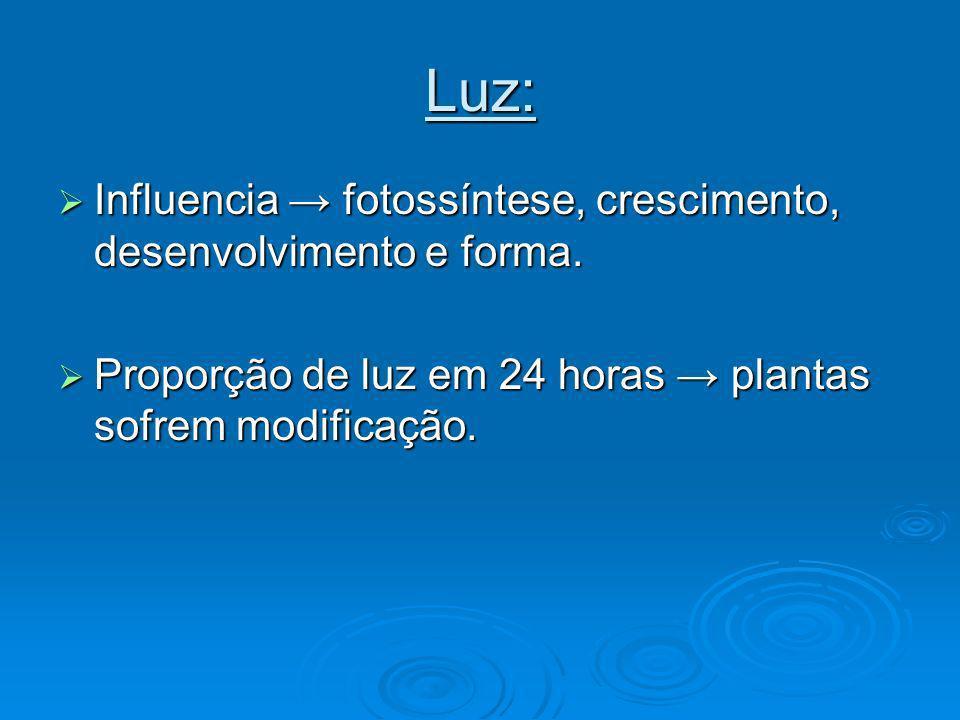 Luz: Influencia fotossíntese, crescimento, desenvolvimento e forma. Influencia fotossíntese, crescimento, desenvolvimento e forma. Proporção de luz em