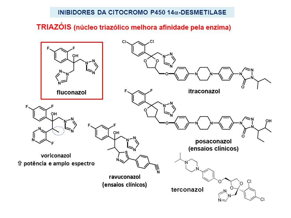 ravuconazol (ensaios clínicos) voriconazol potência e amplo espectro potência e amplo espectro INIBIDORES DA CITOCROMO P450 14 -DESMETILASE terconazol