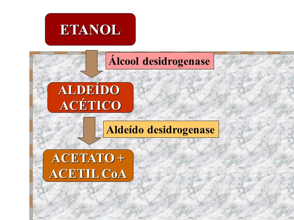 ETANOL ALDEÍDOACÉTICO ACETATO + ACETIL CoA Álcool desidrogenase Aldeído desidrogenase