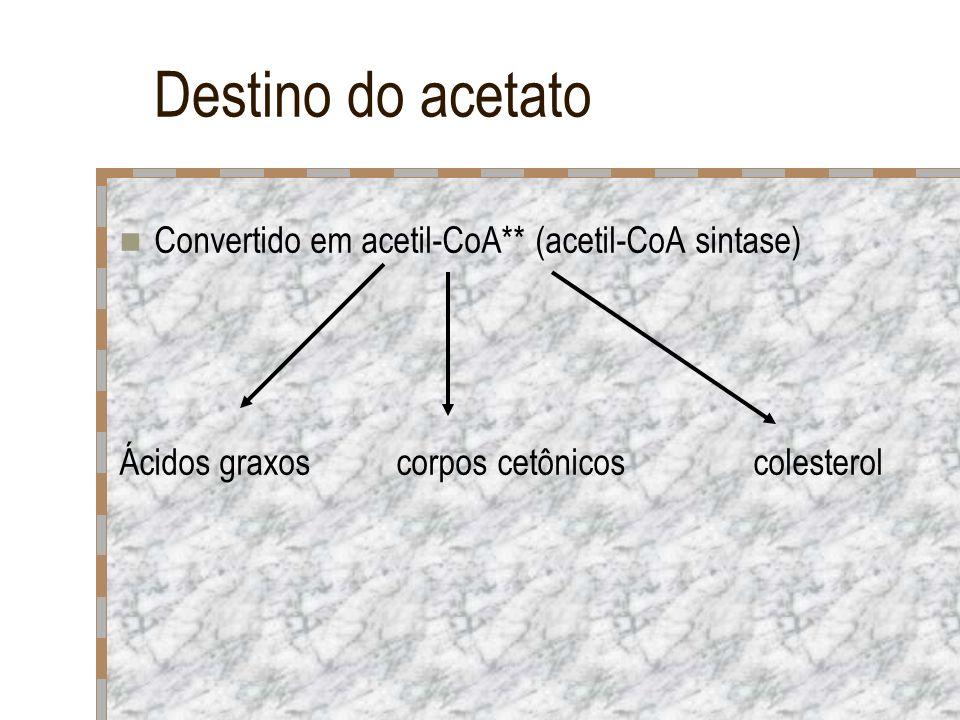 Destino do acetato Convertido em acetil-CoA** (acetil-CoA sintase) Ácidos graxos corpos cetônicos colesterol