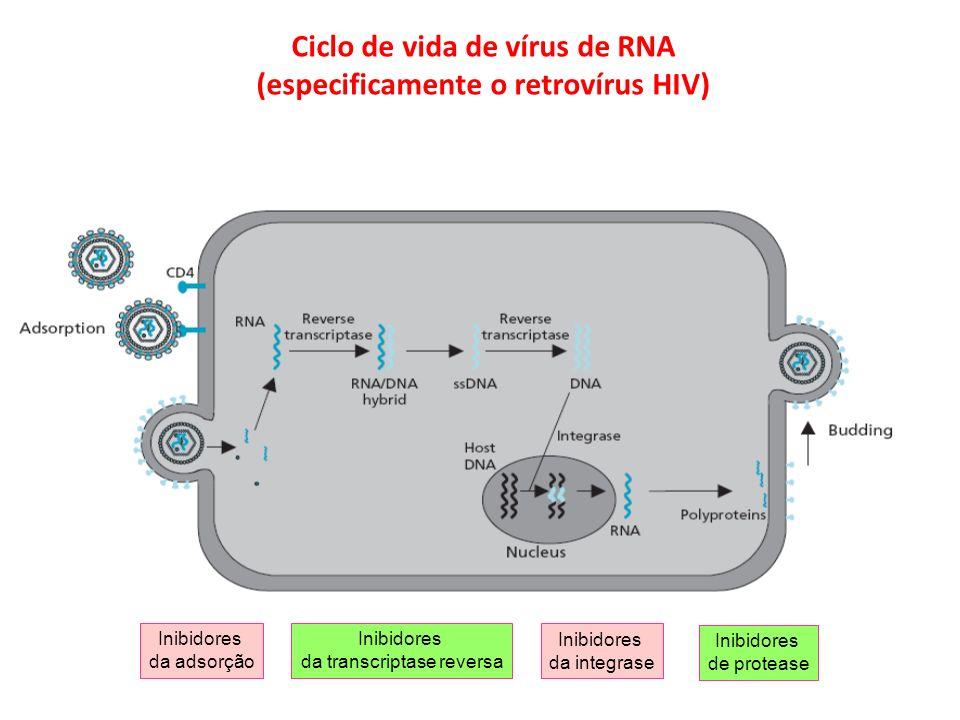 Ciclo de vida de vírus de RNA (especificamente o retrovírus HIV) Inibidores da transcriptase reversa Inibidores de protease Inibidores da adsorção Ini