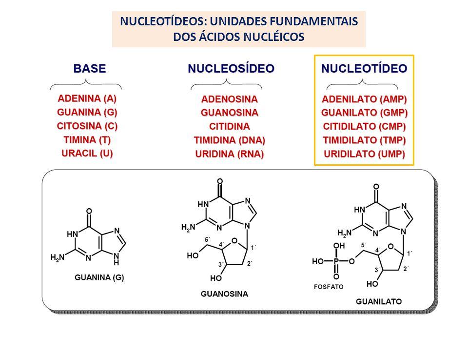 NUCLEOTÍDEOS: UNIDADES FUNDAMENTAIS DOS ÁCIDOS NUCLÉICOS