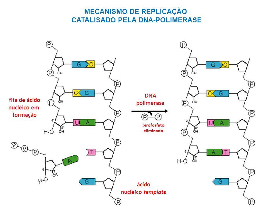 fita de ácido nucléico em formação ácido nucléico template DNA polimerase pirofosfato eliminado MECANISMO DE REPLICAÇÃO CATALISADO PELA DNA-POLIMERASE