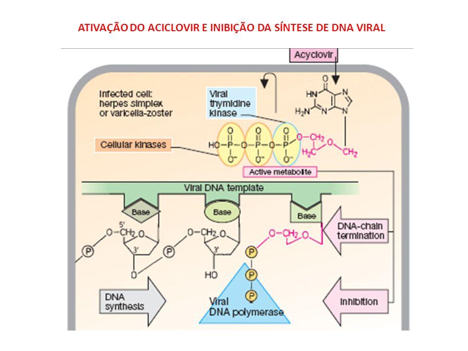 Ciclo de vida de vírus de RNA (especificamente o retrovírus HIV) Inibidores da transcriptase reversa Inibidores de protease Inibidores da adsorção Inibidores da integrase