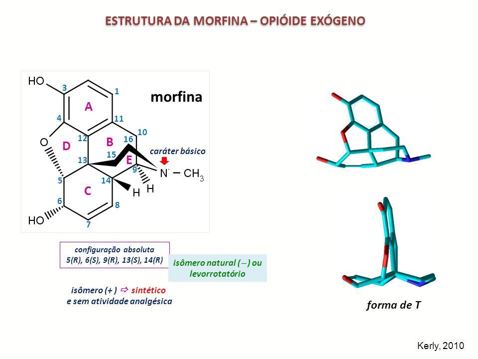 ESTRUTURA DA MORFINA – OPIÓIDE EXÓGENO morfina 3D 1 3 4 5 6 7 8 9 10 11 12 13 14 15 16 A D B E C caráter básico morfina forma de T configuração absolu