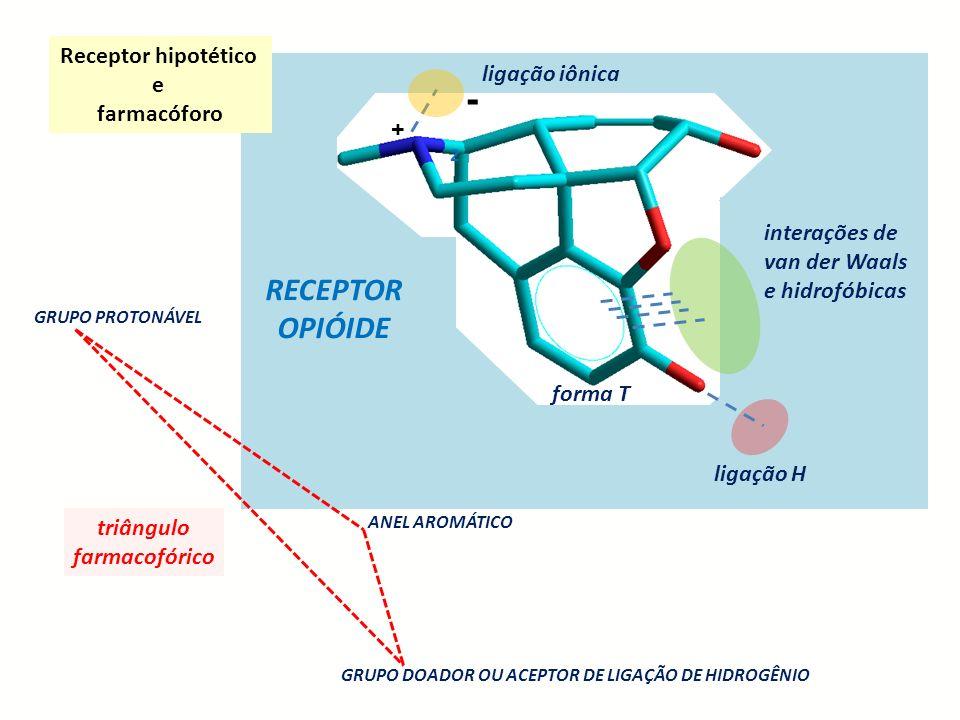 2 + - ligação iônica ligação H interações de van der Waals e hidrofóbicas RECEPTOR OPIÓIDE GRUPO PROTONÁVEL ANEL AROMÁTICO triângulo farmacofórico for