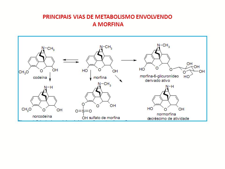PRINCIPAIS VIAS DE METABOLISMO ENVOLVENDO A MORFINA