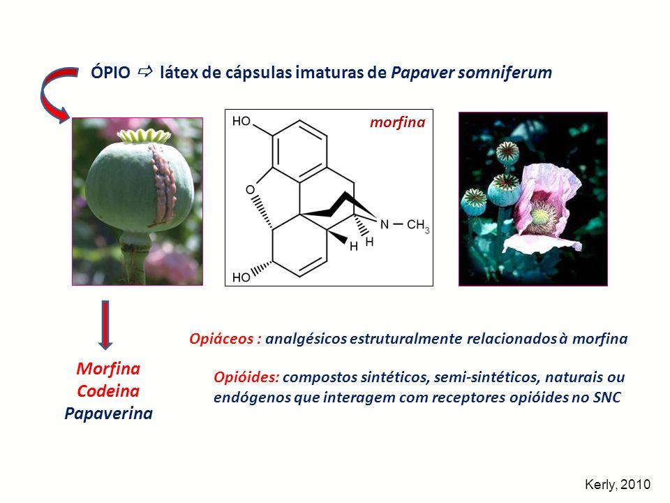 morfina ÓPIO látex de cápsulas imaturas de Papaver somniferum Morfina Codeina Papaverina Opiáceos : analgésicos estruturalmente relacionados à morfina