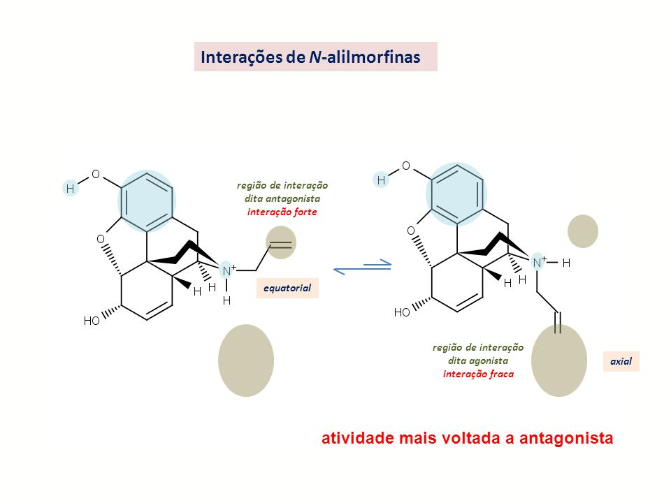 região de interação dita antagonista interação forte equatorial região de interação dita agonista interação fraca axial Interações de N-alilmorfinas a